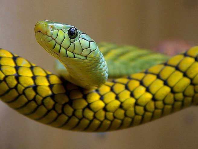 snakes-green-reptile